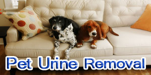 pet urine removal